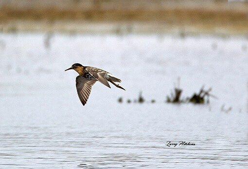 Conservation Reserve Program Wetland