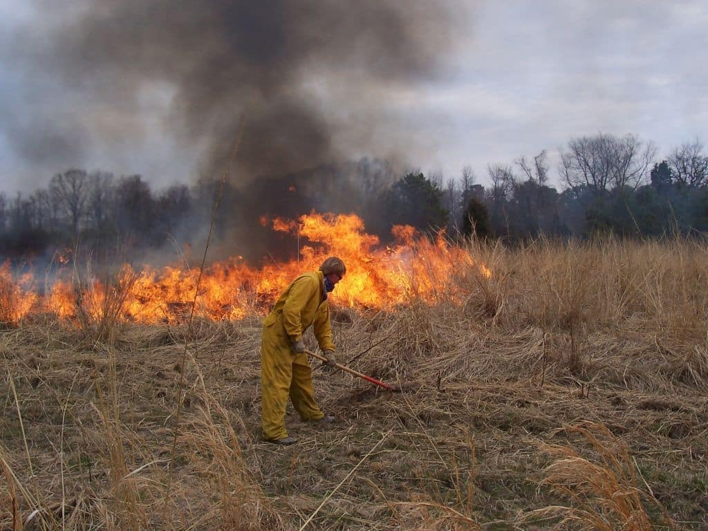Controlled Burn at Cottingham Farm