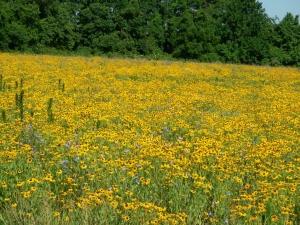807 013.jpg Pollinator meadow
