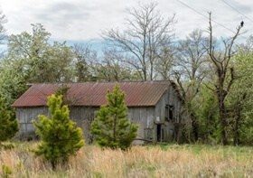 BN - old barn with vulture on tree - 04-2013 copy