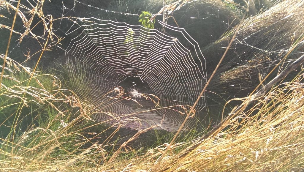 Spider web IMAG0004