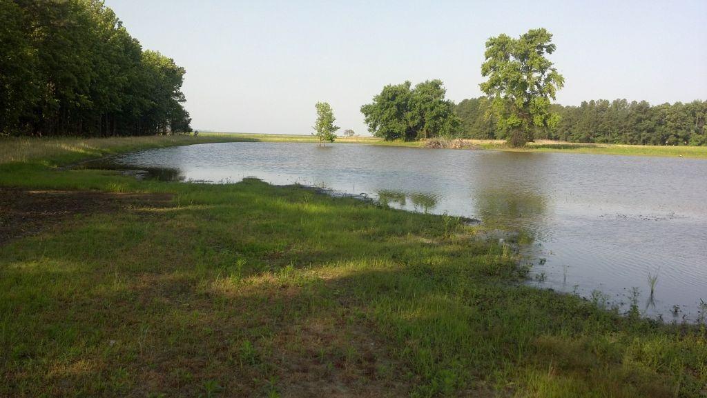 Talisman restored wetland 2012