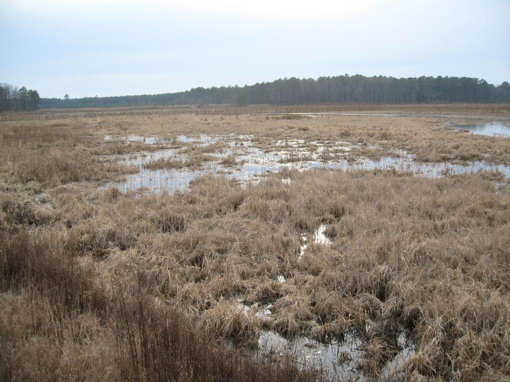 Wetland restored in Dorchester Co