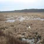 Wetland restored in Dorchester Co